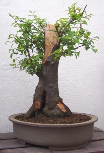 http://www.espritsdegoshin.fr/components/com_agora/img/members/10693_prunier22.04.2004_012.jpg