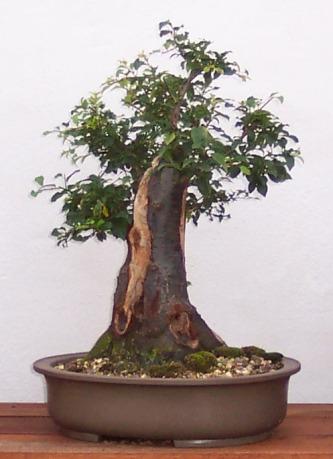 http://www.espritsdegoshin.fr/components/com_agora/img/members/10704_prunier2004-08-16_020.jpg