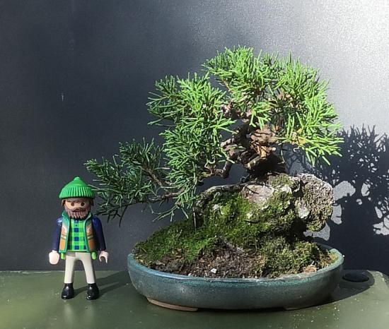 http://www.espritsdegoshin.fr/components/com_agora/img/members/1567/mini_Juniperus-chinensis--itoigawa-.png