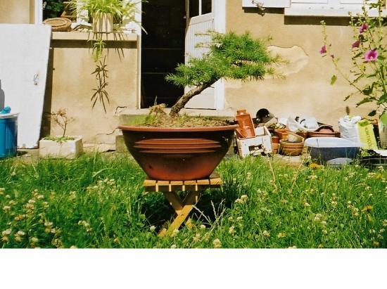 http://www.espritsdegoshin.fr/components/com_agora/img/members/1680/mini_cèdre-en-2000.png