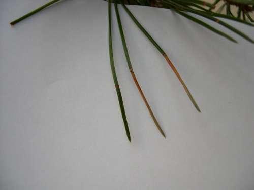 http://www.espritsdegoshin.fr/components/com_agora/img/members/1761/bonsai-divers-006-500.jpg