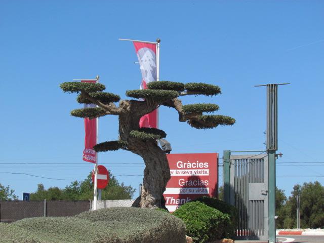 http://www.espritsdegoshin.fr/components/com_agora/img/members/1856/voyage-en-espagne--bonsai-065.jpg