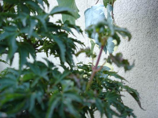 http://www.espritsdegoshin.fr/components/com_agora/img/members/1944/mini_shishigaschira.JPG