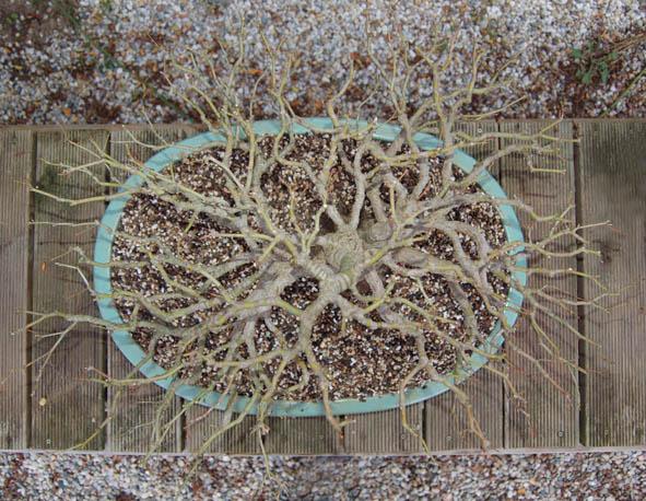 http://www.espritsdegoshin.fr/components/com_agora/img/members/1958/14-décembre-2009.jpg
