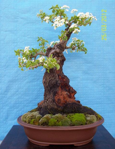 http://www.espritsdegoshin.fr/components/com_agora/img/members/2012/04042012-2038_2012-a.jpg