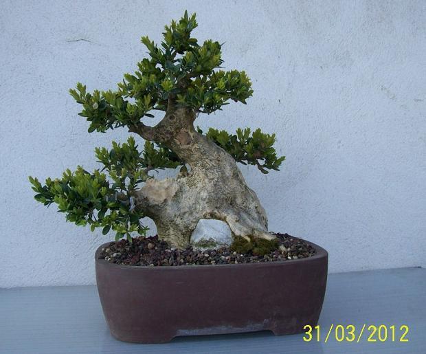 http://www.espritsdegoshin.fr/components/com_agora/img/members/2012/04042012-2039_2012-a.jpg