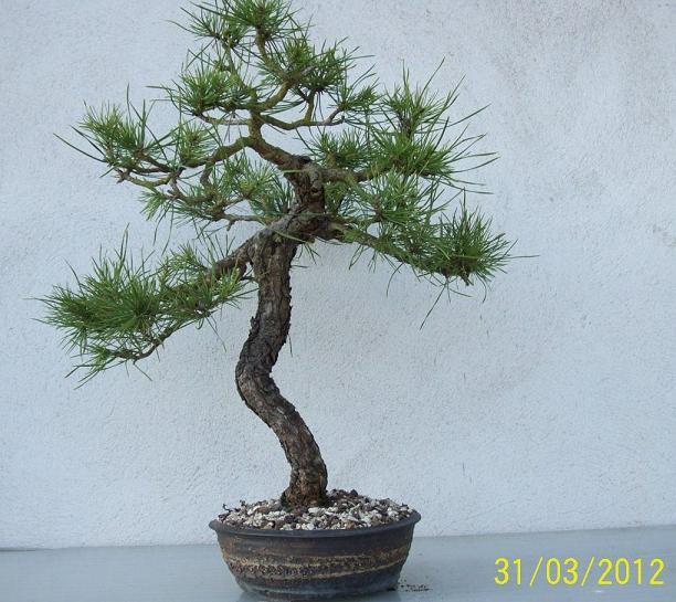 http://www.espritsdegoshin.fr/components/com_agora/img/members/2012/04042012-2040_2012-a.jpg