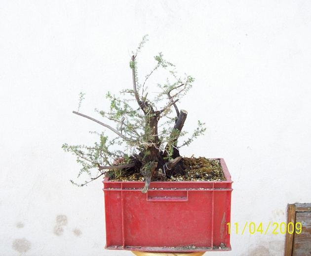 http://www.espritsdegoshin.fr/components/com_agora/img/members/2012/2009-a.JPG