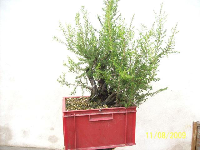 http://www.espritsdegoshin.fr/components/com_agora/img/members/2012/2009-d.JPG