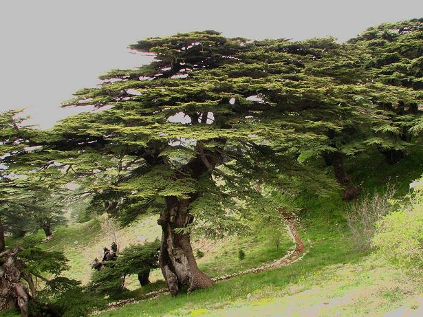 http://www.espritsdegoshin.fr/components/com_agora/img/members/2032/19072011-1130_cedre01.jpg