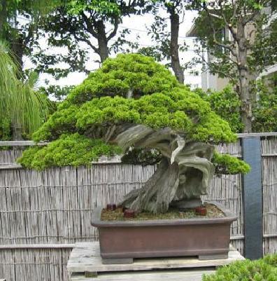 http://www.espritsdegoshin.fr/components/com_agora/img/members/2032/65957-kimura0010.jpg