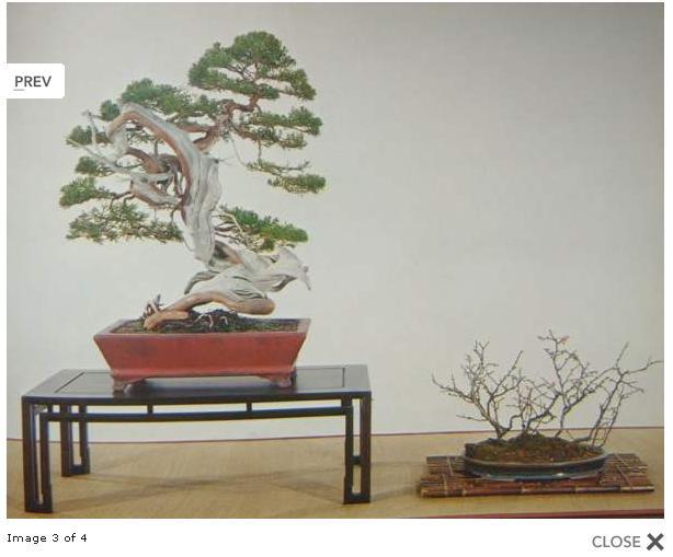 http://www.espritsdegoshin.fr/components/com_agora/img/members/2032/juni-kokufu-48-1974.JPG