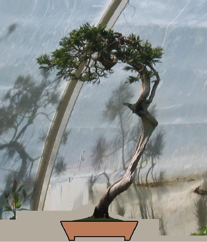 http://www.espritsdegoshin.fr/components/com_agora/img/members/2032/juniperus-rastrera-2013-05-06-facevirt.jpg