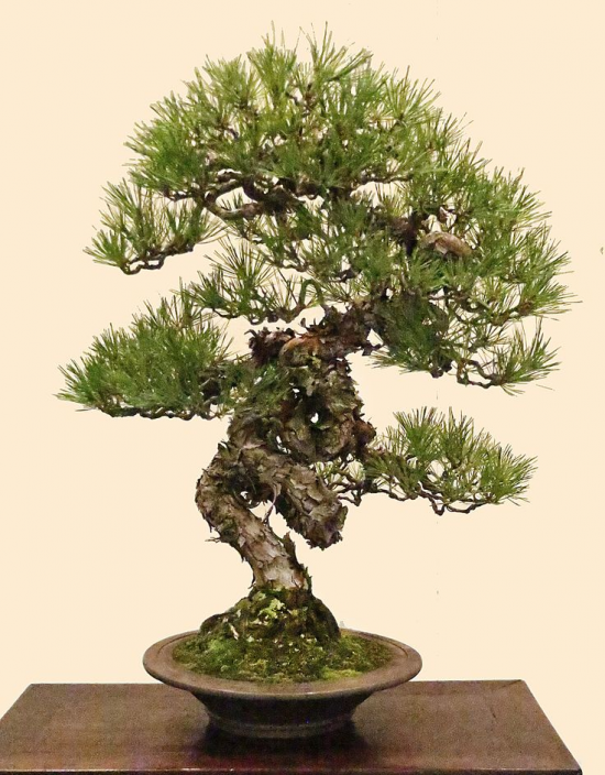 http://www.espritsdegoshin.fr/components/com_agora/img/members/2032/mini_9187c18a038544f0050b6a229722a974--exhibitions-pine.jpg