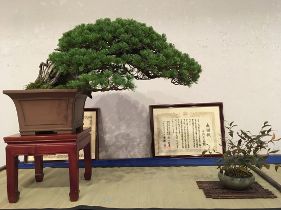 http://www.espritsdegoshin.fr/components/com_agora/img/members/2032/mini_Kiryu-Bonsai-Association-01.JPG
