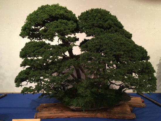 http://www.espritsdegoshin.fr/components/com_agora/img/members/2032/mini_Kiryu-Bonsai-Association-02.JPG