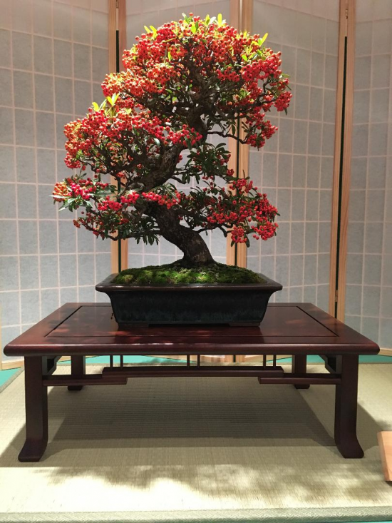 http://www.espritsdegoshin.fr/components/com_agora/img/members/2032/mini_Kiryu-Bonsai-Association-03.JPG