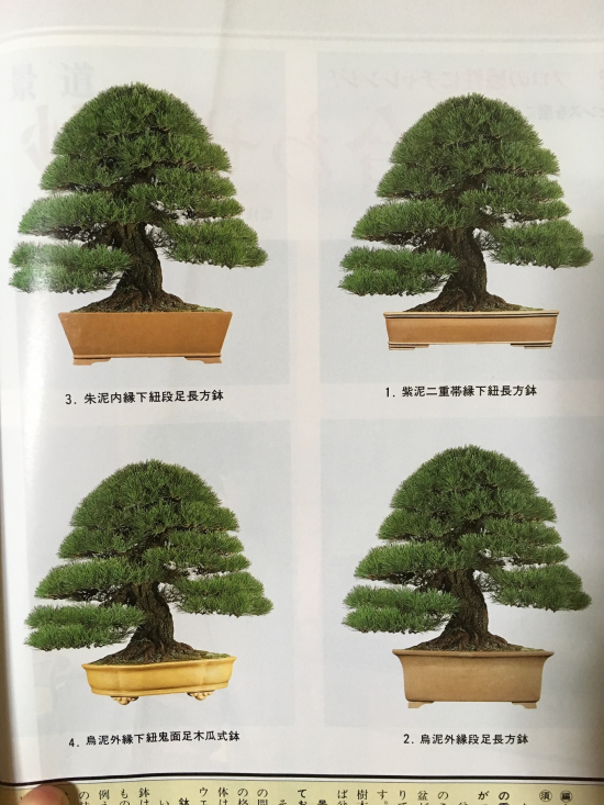 http://www.espritsdegoshin.fr/components/com_agora/img/members/2032/mini_accord-arbre-pot-1997.JPG