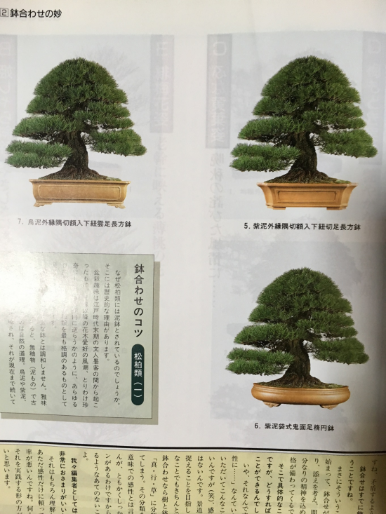 http://www.espritsdegoshin.fr/components/com_agora/img/members/2032/mini_accord-arbre-pot-1998.JPG