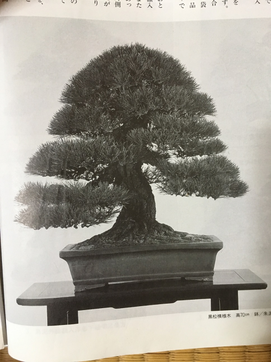 http://www.espritsdegoshin.fr/components/com_agora/img/members/2032/mini_accord-arbre-pot-1999.JPG