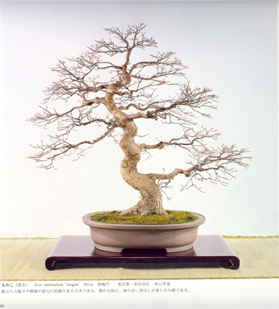 http://www.espritsdegoshin.fr/components/com_agora/img/members/2032/mini_acer-palmatum-kokufu62-1988.jpg