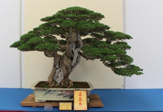 http://www.espritsdegoshin.fr/components/com_agora/img/members/2032/mini_arbre-Taiwan04.jpg