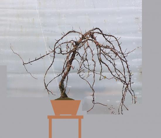http://www.espritsdegoshin.fr/components/com_agora/img/members/2032/mini_hydrangea-petiolaris-cordifolia-2019-10-24-007facevirt1.jpg