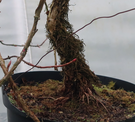 http://www.espritsdegoshin.fr/components/com_agora/img/members/2032/mini_hydrangea-petiolaris-cordifolia-2019-11-06-003.JPG