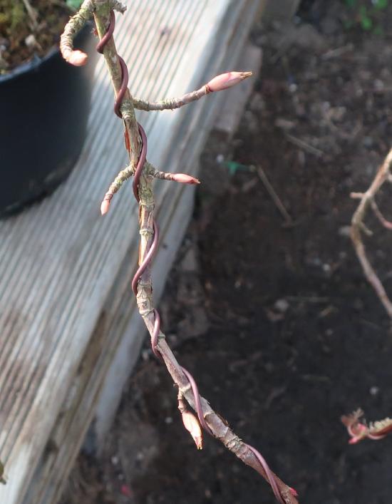 http://www.espritsdegoshin.fr/components/com_agora/img/members/2032/mini_hydrangea-petiolaris-cordifolia-2020-02-18-001.JPG
