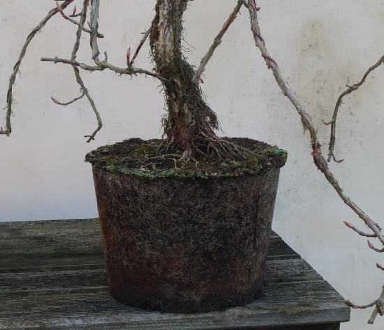 http://www.espritsdegoshin.fr/components/com_agora/img/members/2032/mini_hydrangea-petiolaris-cordifolia-2020-02-18-003.JPG