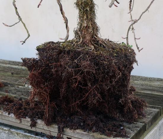 http://www.espritsdegoshin.fr/components/com_agora/img/members/2032/mini_hydrangea-petiolaris-cordifolia-2020-02-18-004.JPG