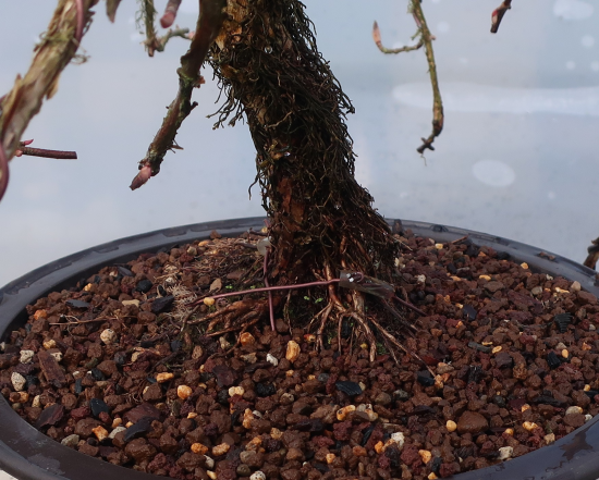 http://www.espritsdegoshin.fr/components/com_agora/img/members/2032/mini_hydrangea-petiolaris-cordifolia-2020-02-18-006.JPG