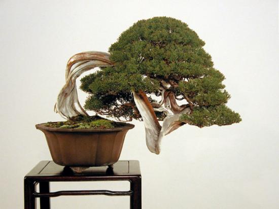 http://www.espritsdegoshin.fr/components/com_agora/img/members/2032/mini_juni-kengai-2-kokufu-76-2002.jpg