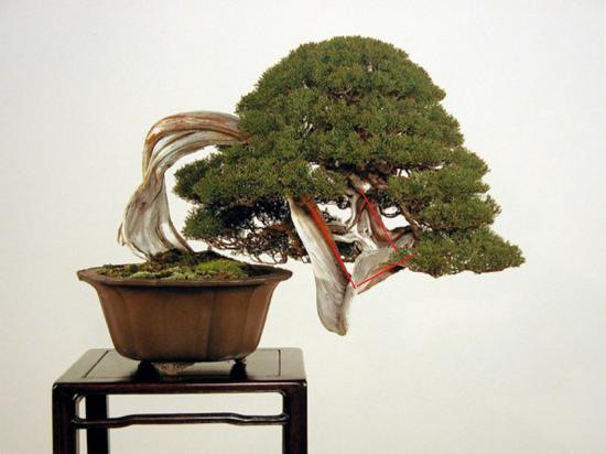 http://www.espritsdegoshin.fr/components/com_agora/img/members/2032/mini_juni-kengai-2-kokufu-76-2002virt2.jpg