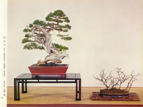 http://www.espritsdegoshin.fr/components/com_agora/img/members/2032/mini_juni1-kokufu-48-1974.jpg