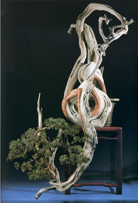http://www.espritsdegoshin.fr/components/com_agora/img/members/2032/mini_juniperus-cascade-kimura.jpg