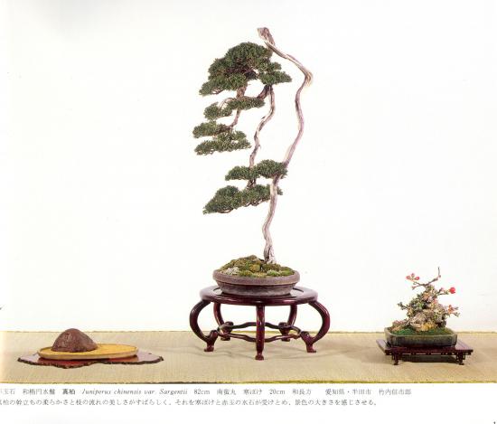 http://www.espritsdegoshin.fr/components/com_agora/img/members/2032/mini_juniperus-chinensis-ajisawa-kokufu-62-1988.jpg