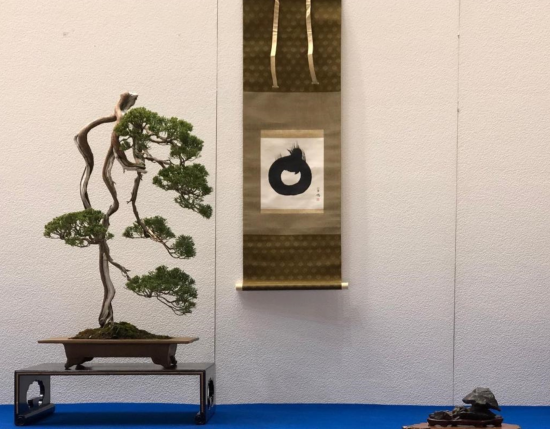http://www.espritsdegoshin.fr/components/com_agora/img/members/2032/mini_juniperus-chinensis-ajisawa.jpg