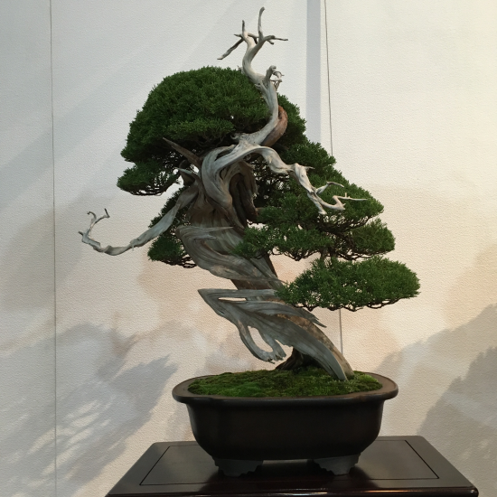 http://www.espritsdegoshin.fr/components/com_agora/img/members/2032/mini_juniperus-chinensis-kokufu2021-2.jpeg