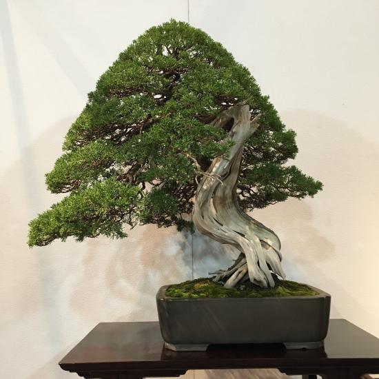 http://www.espritsdegoshin.fr/components/com_agora/img/members/2032/mini_juniperus-chinensis-kokufu2021-3.jpeg