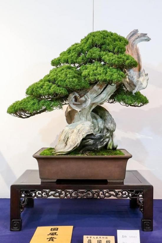 http://www.espritsdegoshin.fr/components/com_agora/img/members/2032/mini_juniperus-chinensis-kokufu2021.jpeg