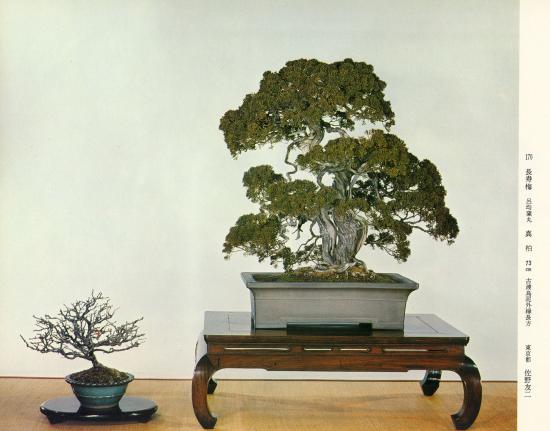 http://www.espritsdegoshin.fr/components/com_agora/img/members/2032/mini_juniperus-chinensis01-kokufu48-1974.jpg