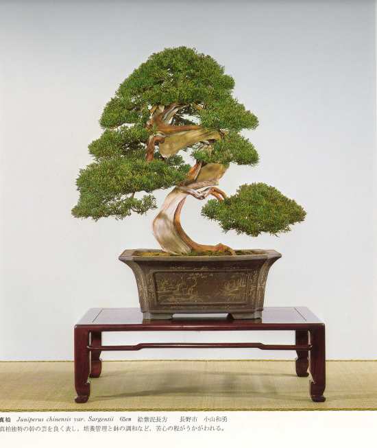 http://www.espritsdegoshin.fr/components/com_agora/img/members/2032/mini_juniperus-chinensis11-kokufu57-1983.jpg