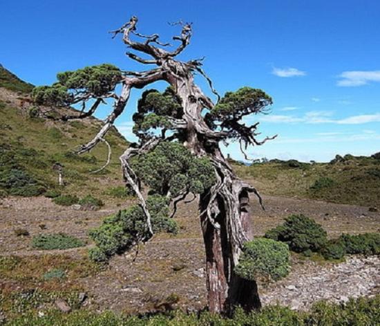 http://www.espritsdegoshin.fr/components/com_agora/img/members/2032/mini_juniperus-nature.jpg
