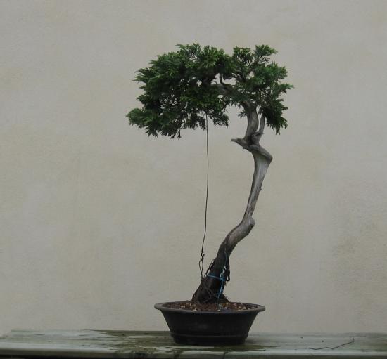 http://www.espritsdegoshin.fr/components/com_agora/img/members/2032/mini_juniperus-rastrera-2014-05-07-001.JPG