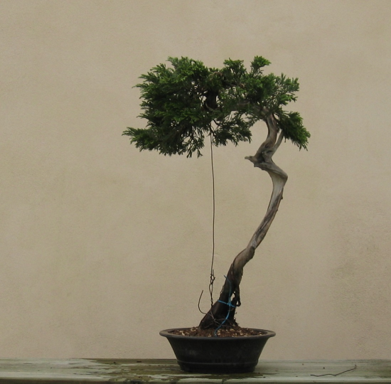 http://www.espritsdegoshin.fr/components/com_agora/img/members/2032/mini_juniperus-rastrera-2014-05-07-002.JPG