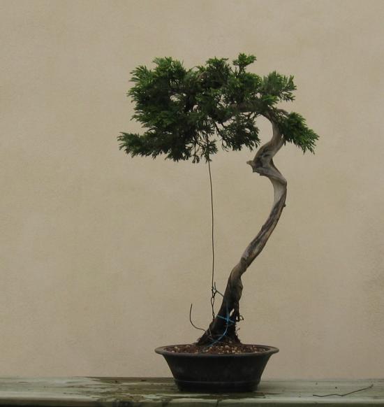 http://www.espritsdegoshin.fr/components/com_agora/img/members/2032/mini_juniperus-rastrera-2014-05-07-003.JPG