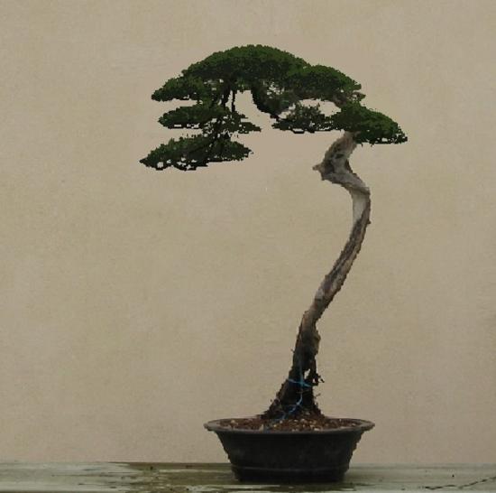 http://www.espritsdegoshin.fr/components/com_agora/img/members/2032/mini_juniperus-rastrera-2014-05-07-003virt.jpg