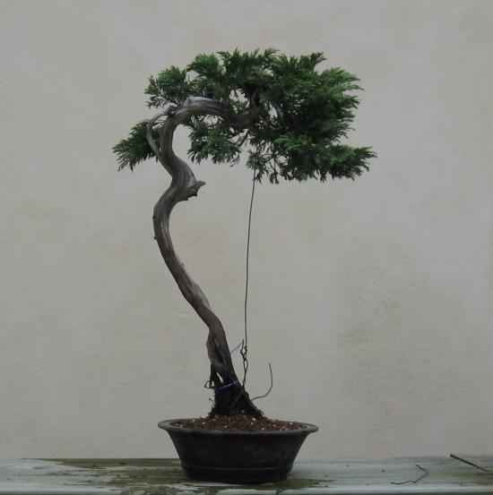http://www.espritsdegoshin.fr/components/com_agora/img/members/2032/mini_juniperus-rastrera-2014-05-07-004.JPG