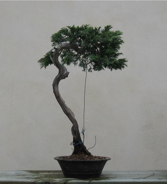 http://www.espritsdegoshin.fr/components/com_agora/img/members/2032/mini_juniperus-rastrera-2014-05-07-005.JPG
